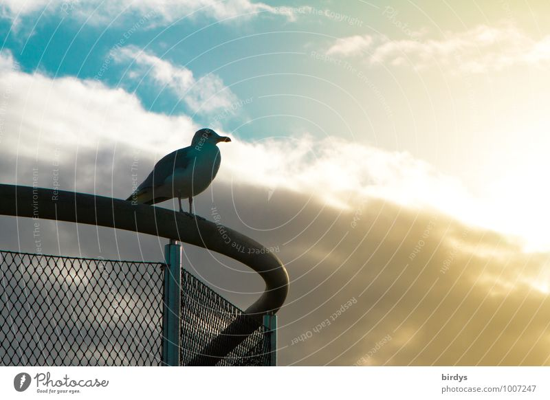 Sky Blue Calm Clouds Animal Far-off places Yellow Contentment Wait Esthetic Vantage point Observe Handrail Serene Seagull Positive
