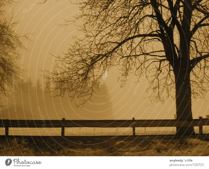 Tree Loneliness Calm Winter Forest Cold Snow Think Fog Branch Grief Tree trunk Fence Distress Frustration