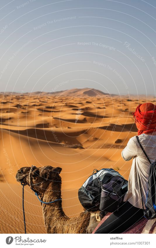 Desert (7/10) Sand Dune Warmth Vacation & Travel Tourism Near and Middle East Arabia Sahara 100 and one night Morocco Algeria Tunisia Adventure Thirst Merzouga