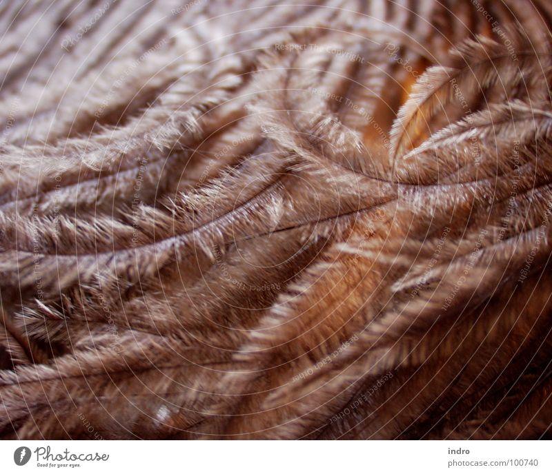 Warmth Bird Soft Feather Physics Easy Emu