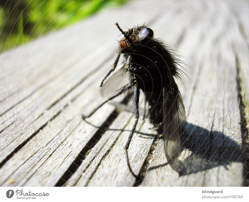 Green Sun Summer Black Animal Eyes Death Gray Wood Hair and hairstyles Legs Brown Fly Teacher Exceptional Stand