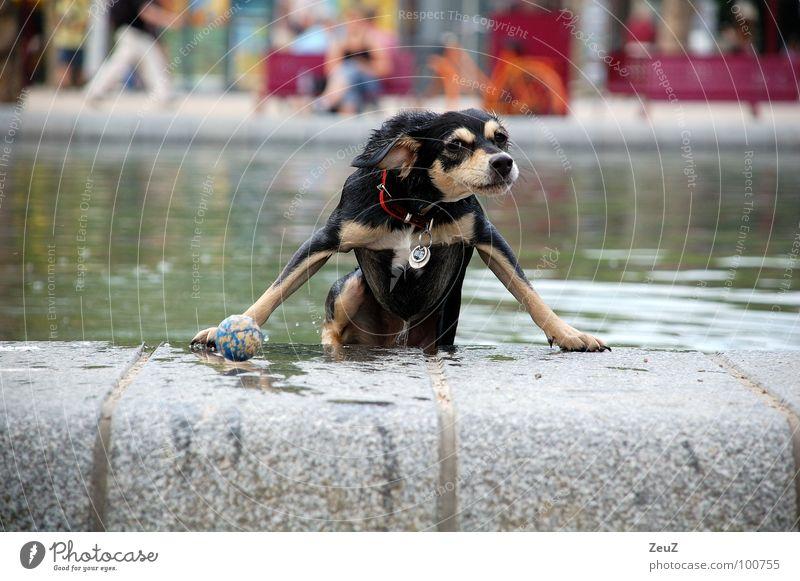 Water rat I Dog Animal Small Drop Damp Wet Swimming & Bathing Cold Pond Exterior shot Mammal Ball Success Joy Target