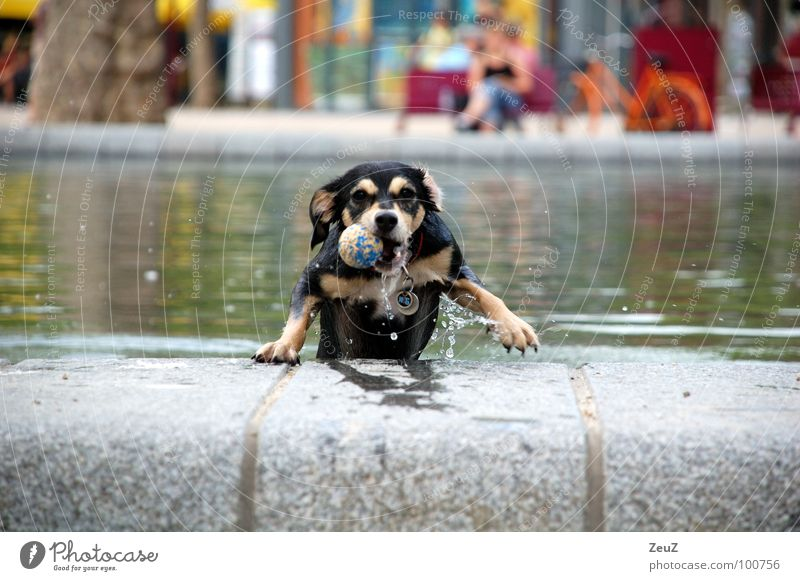 Water Joy Animal Cold Dog Small Wet Success Ball Drop Target Swimming & Bathing Damp Pond Mammal
