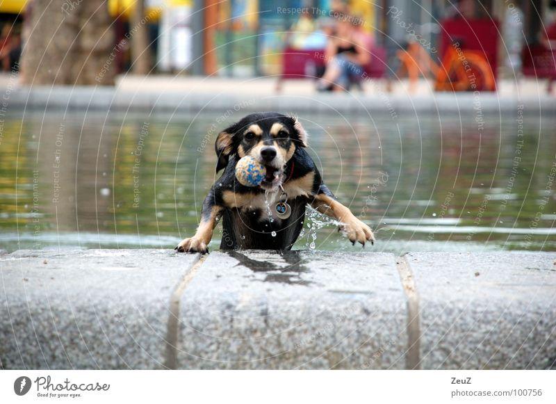 Water Joy Animal Cold Dog Small Wet Success Ball Drop Target Swimming & Bathing Damp Pond Mammal