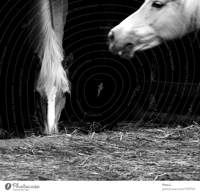 Wendy Horse Farm Country life To feed Straw Bedding Mane Pipe dream Village Motion blur Mammal Animal wendy Appetite Neck Walking intact world Province