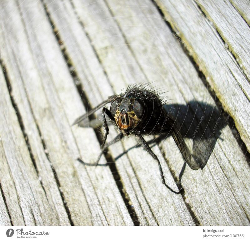 Green Sun Summer Black Animal Eyes Death Gray Wood Hair and hairstyles Legs Brown Fly Exceptional Stand Wing