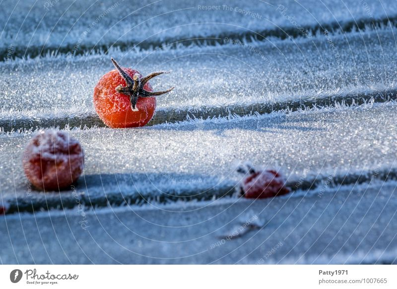 Plant Winter Cold Food Ice Transience Frost Vegetable Tomato Agricultural crop