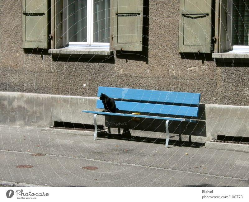 cat bench Cat Wall (building) Shutter Sidewalk Mammal Bench Blue Black cat Sit