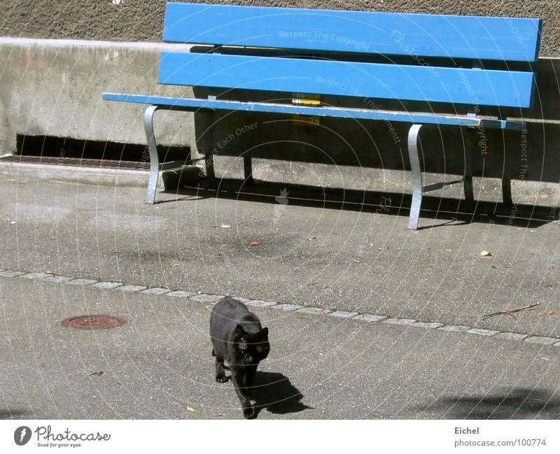 Cat Blue Wall (building) Walking Bench Sidewalk Mammal Shutter