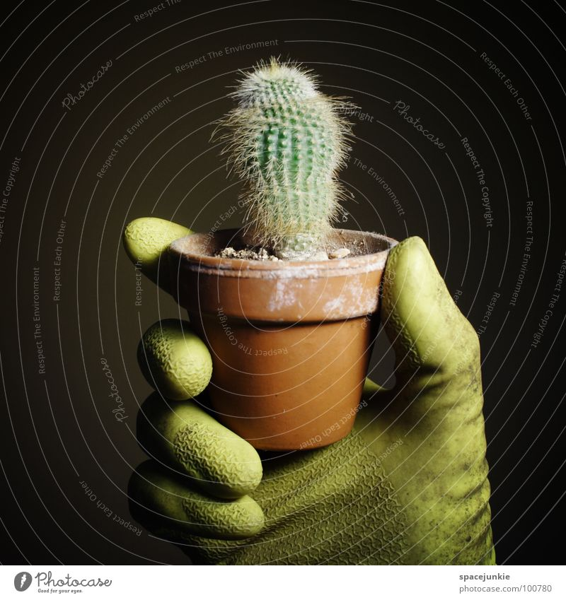 harvest Green Houseplant Thorny Pain Black Dangerous Gloves Gardener Whimsical Funny Joy cactus white spines Desert