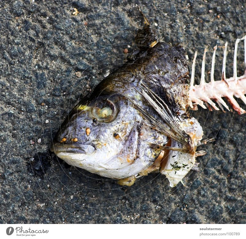 fishhead Fish mouth Breathe Summer Nutrition Food Fisheye Animal Fish bone Transience Disgust Yuck Bah Obscure Mouth Water Eyes Death dead sea dweller Funny ihh