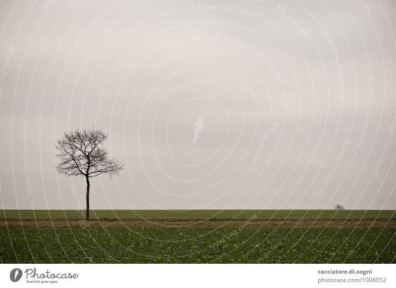 Something outside Environment Landscape Sky Autumn Tree Field Dark Simple Gloomy Gray Green Black Calm Sadness Fatigue Longing Wanderlust Disappointment