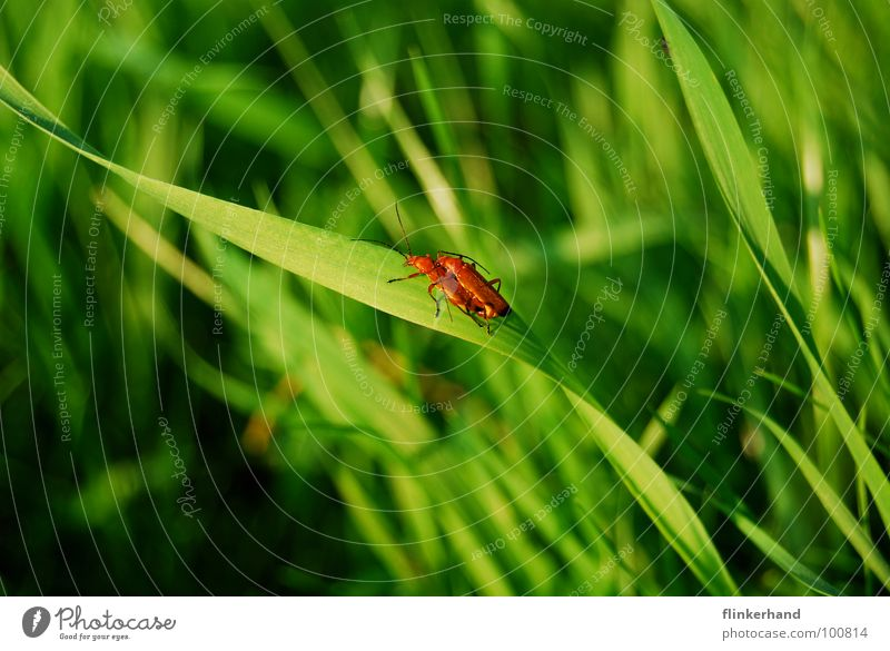 Green Summer Joy Animal Emotions Meadow Lighting Grass Happy Flying Bright Wing Insect Blade of grass Optimism Beetle
