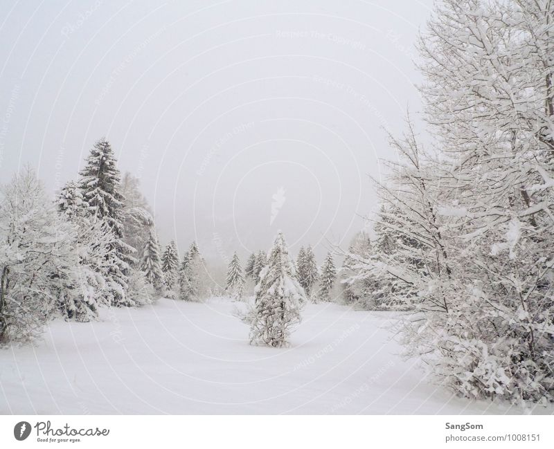 Winter Landscape II Snow Winter vacation Nature Sky Clouds Snowfall Tree Meadow Forest Mountain Relaxation Cold White Joie de vivre (Vitality) Calm Loneliness