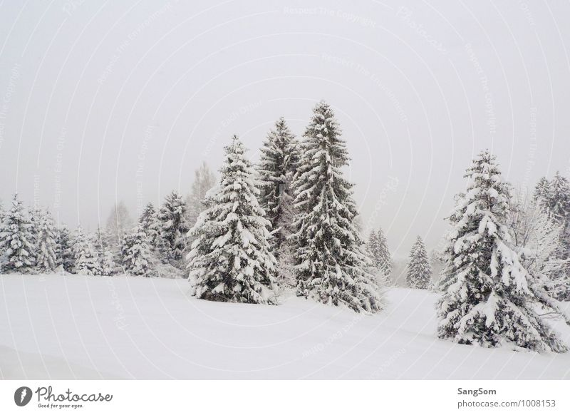 Sky Nature Green White Tree Loneliness Calm Clouds Winter Forest Cold Mountain Meadow Snow Germany Snowfall
