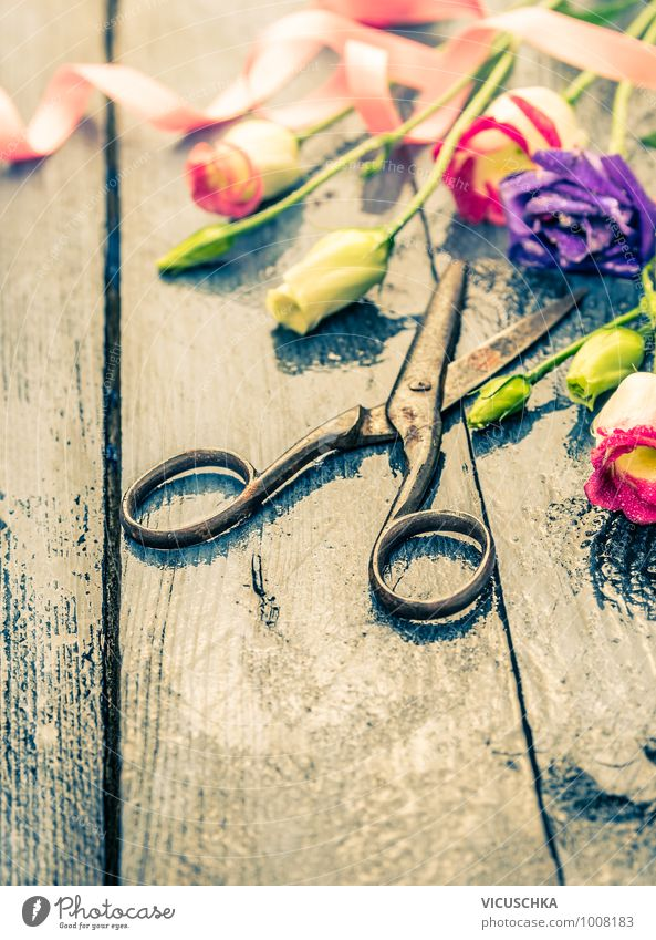 Old scissors and flowers with bow Style Design Garden Interior design Decoration Feasts & Celebrations Plant Flower Blossoming Moody Spring fever Nature