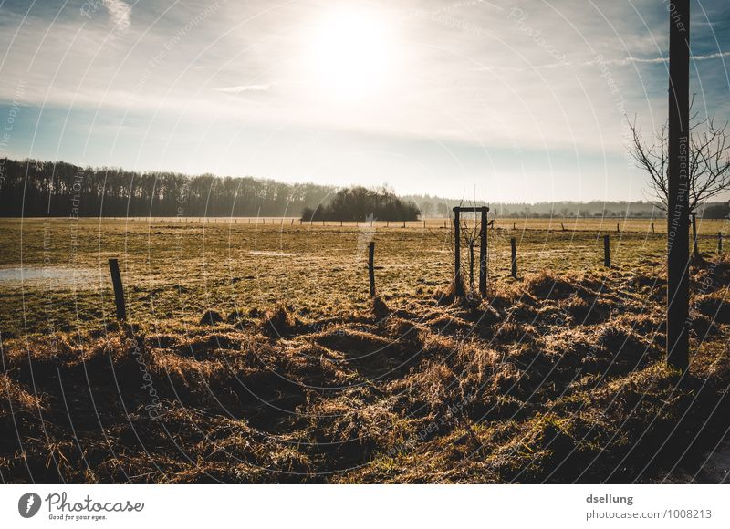 in the morning. Environment Nature Landscape Sky Clouds Sun Sunrise Sunset Sunlight Winter Beautiful weather Tree Field Healthy Cold Wet Natural Blue Brown