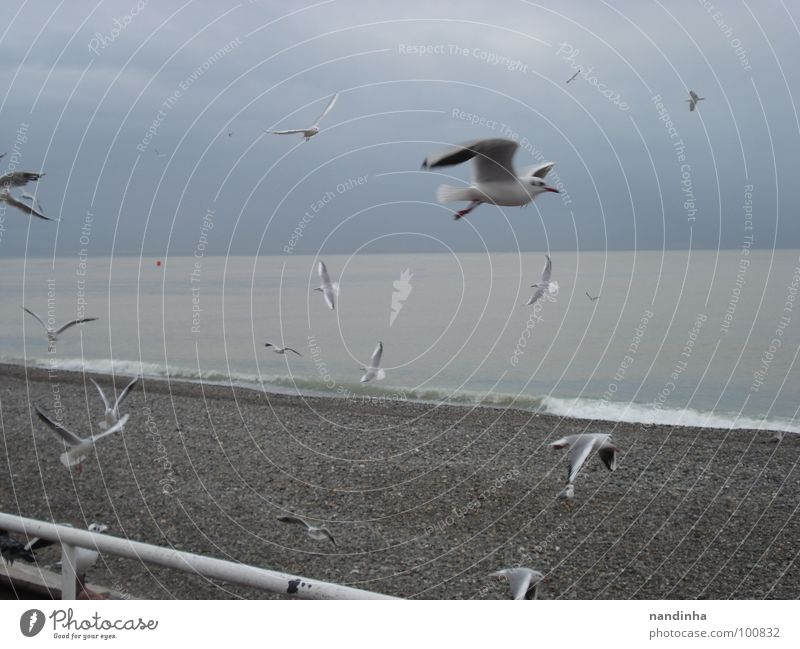 Ocean Beach Loneliness Freedom Gray Bird Coast Mediterranean sea