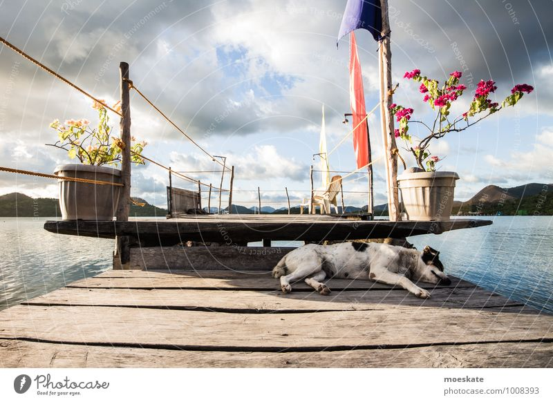 Woof sleep Far-off places Summer Island Beautiful weather Ocean Pet Dog 1 Animal Sleep Philippines Colour photo Subdued colour Exterior shot Day
