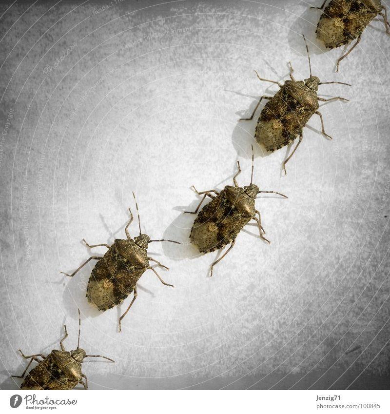 Small Walking Insect Beetle Crawl Bow Pests Diminutive Bug Shield bug