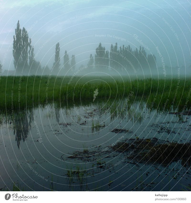 After the rain Cellphone camera Wet Puddle Reflection Fog Tree Poplar Green Environmental protection Beautiful Meadow Field Agriculture Grass Rainwater Go up