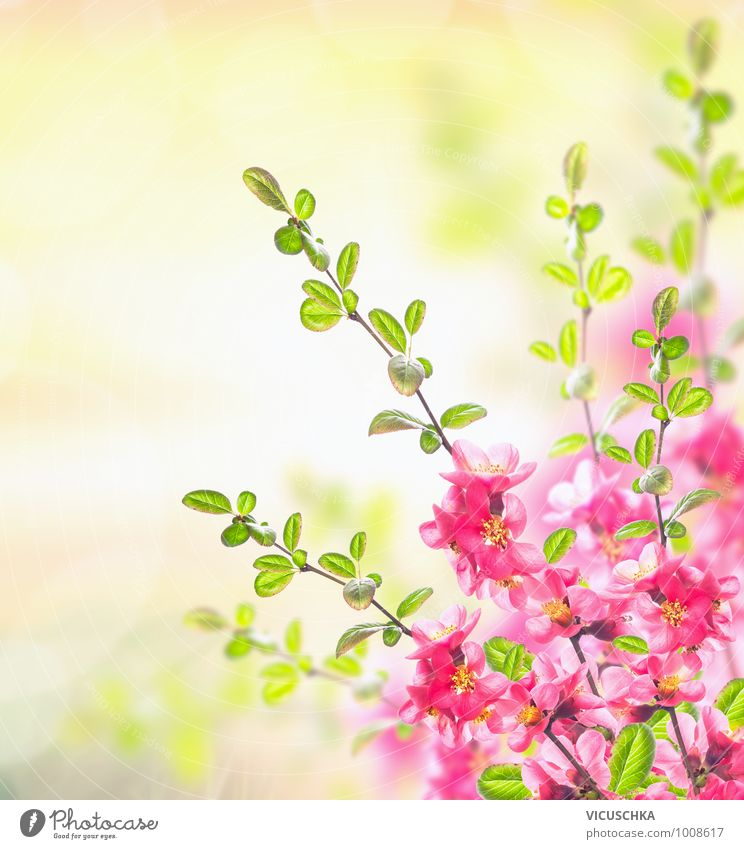 Nature Plant Summer Sun Flower Spring Blossom Background picture Garden Pink Park Design Beautiful weather Fragrance Pollen Faded