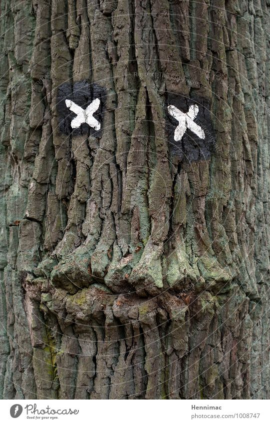 Nature Old Green Tree Animal Face Eyes Wood Brown Friendship Signs and labeling Mouth Creativity Sign Mysterious Lips