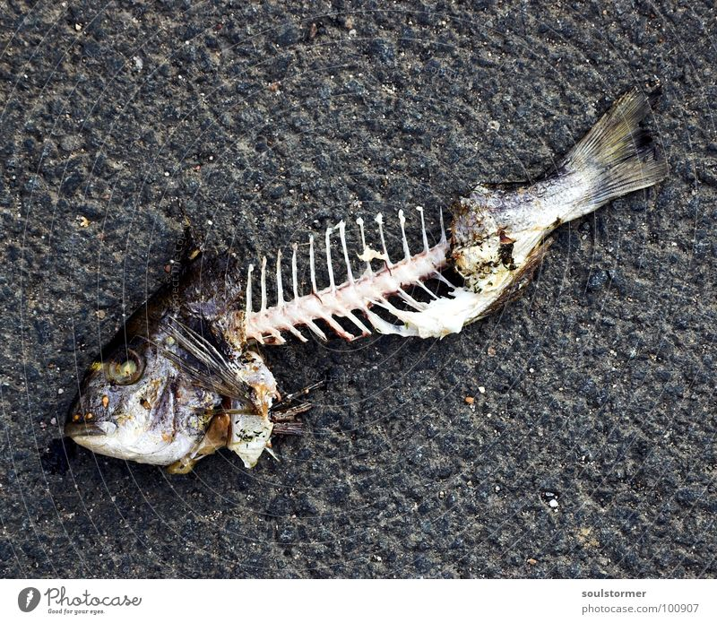 bones Fish mouth Breathe Summer Nutrition Food Fisheye Animal Fish bone Transience Disgust Yuck Bah Tails Tail fluke Skeleton Corpse Tar Gray White Obscure