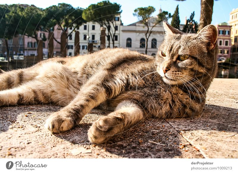 Cat Vacation & Travel Relaxation Joy Animal Environment Wall (building) Architecture Emotions Wall (barrier) Leisure and hobbies Tourism Trip Elements Adventure