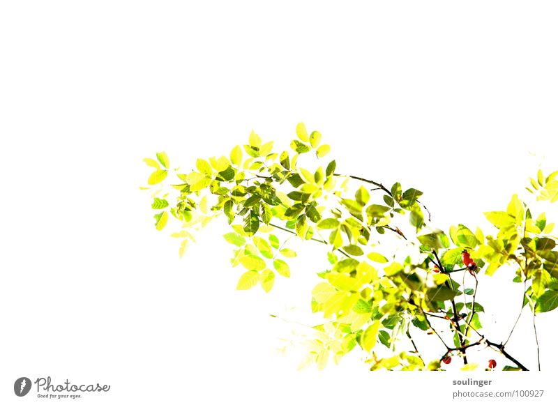 Nature Green Plant Red Yellow Positive Brilliant Overexposure