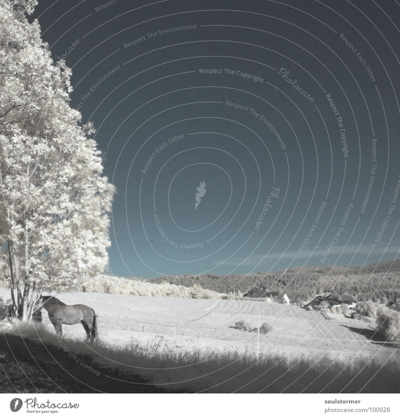 there's a horse... Infrared Meadow Tree Exceptional Jubilee Fence Clouds Infrared color White Wood flour Grass Wall (building) Roof Black Gray New World