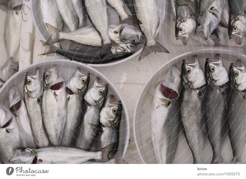 Fischers Fritz Fish Drops of water Ocean Pond Lake Brook River Dead animal Group of animals Eating Catch Hunting Lie Esthetic Authentic Simple Disgust Elegant