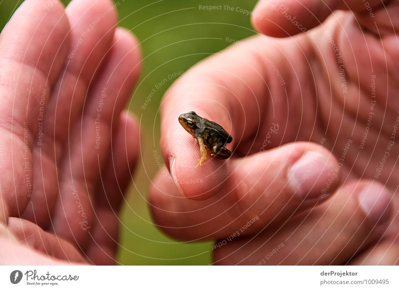 Nature Green Summer Hand Animal Environment Emotions Protection Curiosity Animal face Frog Hideous Bad weather Biology Nature reserve Natural phenomenon
