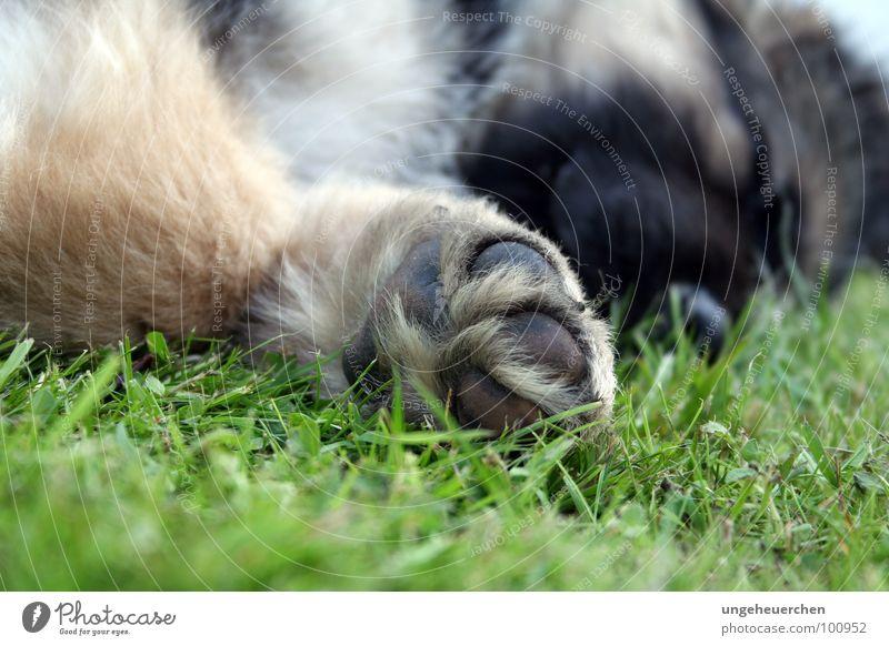 Green Joy Black Relaxation Grass Style Dream Dog Small Feet Friendship Brown Lie Sleep Cute Pelt