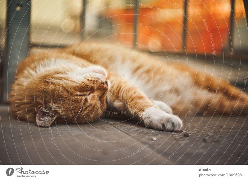 Come on, scratch me! Animal Pet Cat Pelt 1 Relaxation Lie Sleep Cuddly Contentment Joie de vivre (Vitality) Calm Colour photo Exterior shot Deserted Day Blur