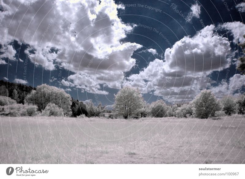 unbelievable... Infrared White Infrared color Passenger train Black Red Clouds Grass Wayside Meadow Wood flour Wood effect Gorgeous Exceptional Dream Fence Tree