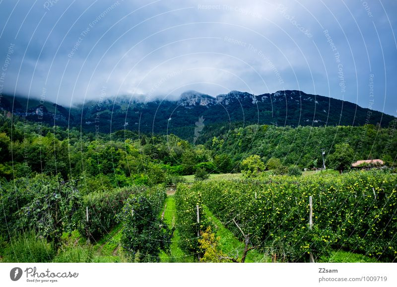 South Tyrol Nature Landscape Storm clouds Summer Climate Weather Beautiful weather Bushes Vine Alps Mountain Threat Fresh Cold Sustainability Idyll Moody