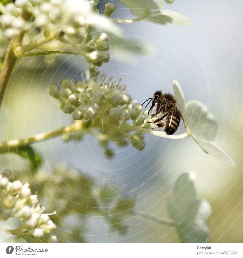 Nature Flower Summer Blossom Search Insect Blossoming Bee Appetite To enjoy Collection Diligent Stamen Costs Nectar