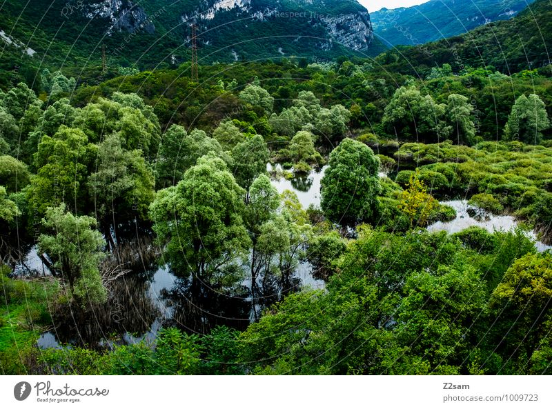 Italian Rainforest Environment Nature Landscape Summer Plant Tree Bushes Alps Mountain Canyon Bog Marsh Lake Gigantic Sustainability Natural Green