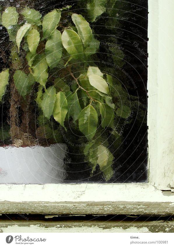 White Tree Green Plant Window Vegetable Pot Entertainment Pane Window frame