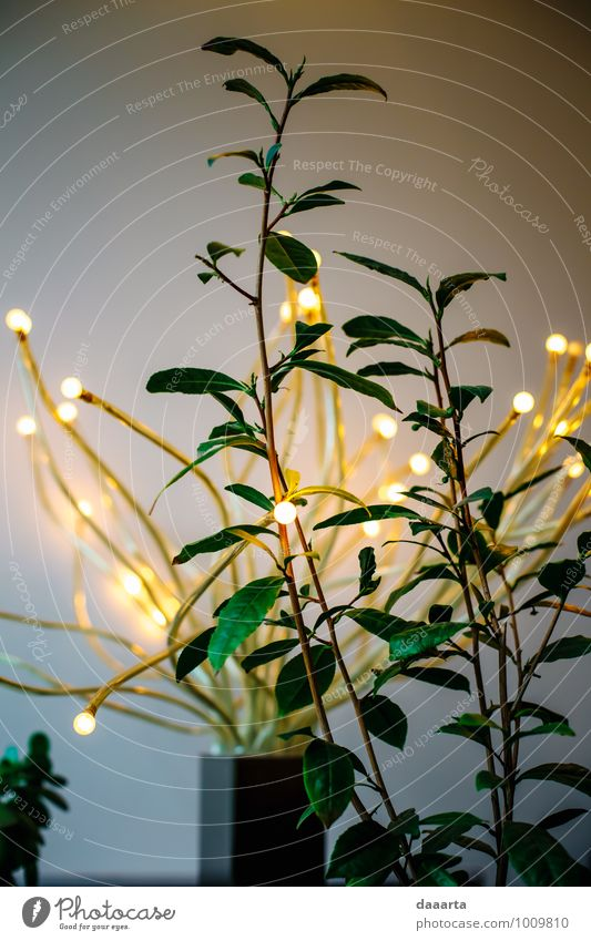 lights Lifestyle Elegant Style Design Joy Harmonious Relaxation Leisure and hobbies Trip Adventure Freedom Entertainment Feasts & Celebrations Flirt Light Plant