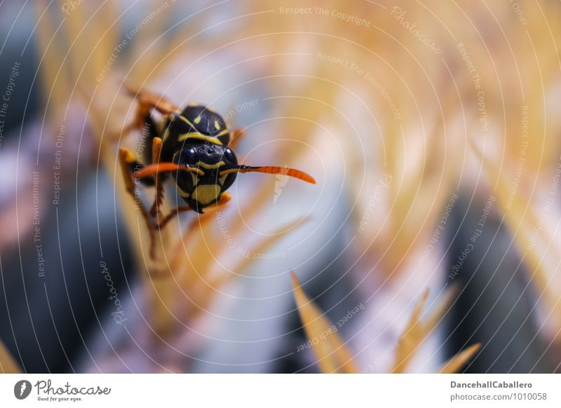 Nature Plant Animal Black Yellow Small Exceptional Fear Elegant Sit Dangerous Observe Threat Insect Crawl Thorny