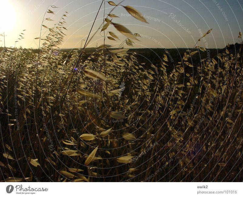 Nature Sky Sun Plant Summer Movement Landscape Lighting Wind Horizon Grain Blade of grass Illuminate Dusk Closing time