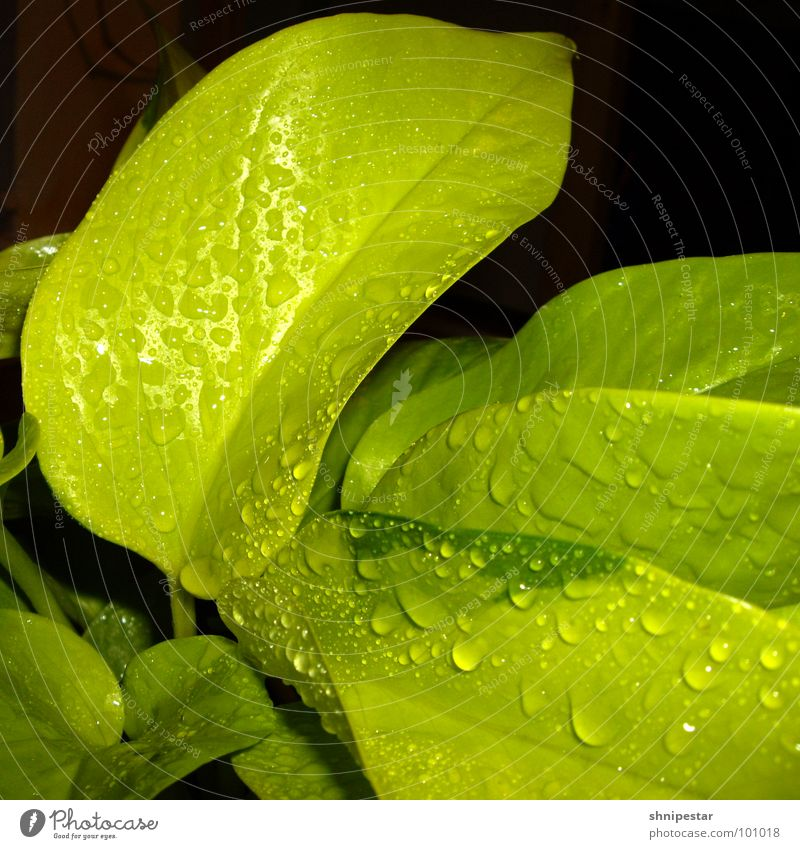 Green Dark Spring Warmth Bright Lighting Drops of water Wet Near Physics Square Fluid Living room Damp Botany Harmonious