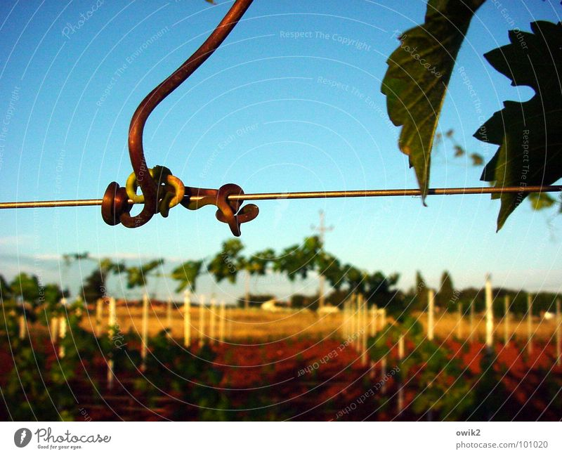 bus stop Nature Landscape Sky Istria Southern Europe Hang Thin Firm Together Natural Blue Yellow Green Red Vine Tendril Vineyard Wine growing Knot Retentive