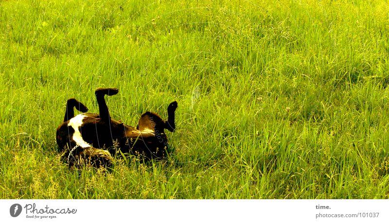 Green Joy Meadow Grass Movement Garden Dog Park Legs Back Wellness Corner Lawn Leisure and hobbies Stomach Traffic infrastructure