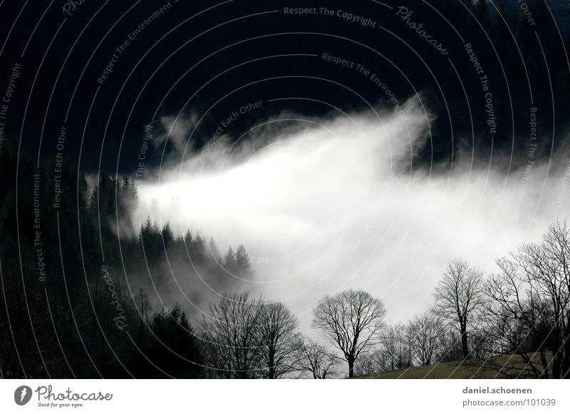 no artificial fog Fog Clouds Black White Abstract Background picture Tree Autumn Black Forest Winter Light Transience Sky Contrast Mountain Shadow