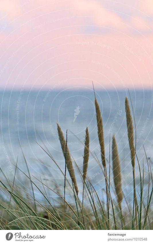 Nature Plant Blue Green Beautiful Summer Water Ocean Beach Environment Grass Natural Coast Pink Fresh Wind