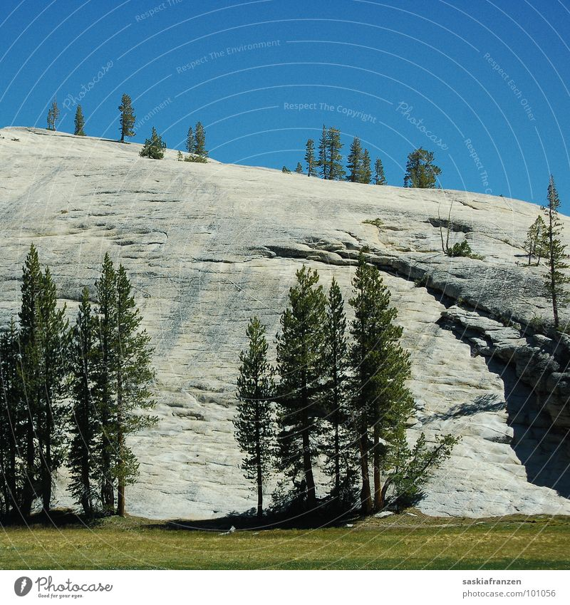 Yosemite I Yosemite National Park Meadow Green Tree Coniferous trees Summer Americas California USA Nature Landscape Stone Rock Mountain Sky Blue