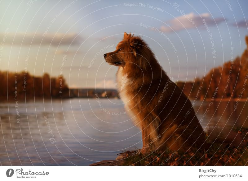 Dog Sky Water Relaxation Clouds Animal Autumn Pet Vienna